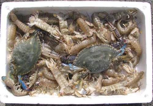 キリさんから......でんべら と 蟹