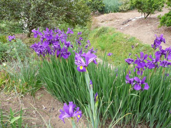 段々畑に咲く花
