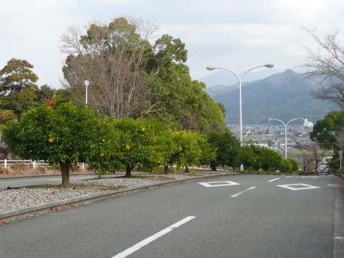 果実の生る坂道