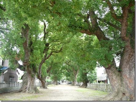 一宮神社の楠