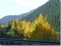 桜三里の黄葉